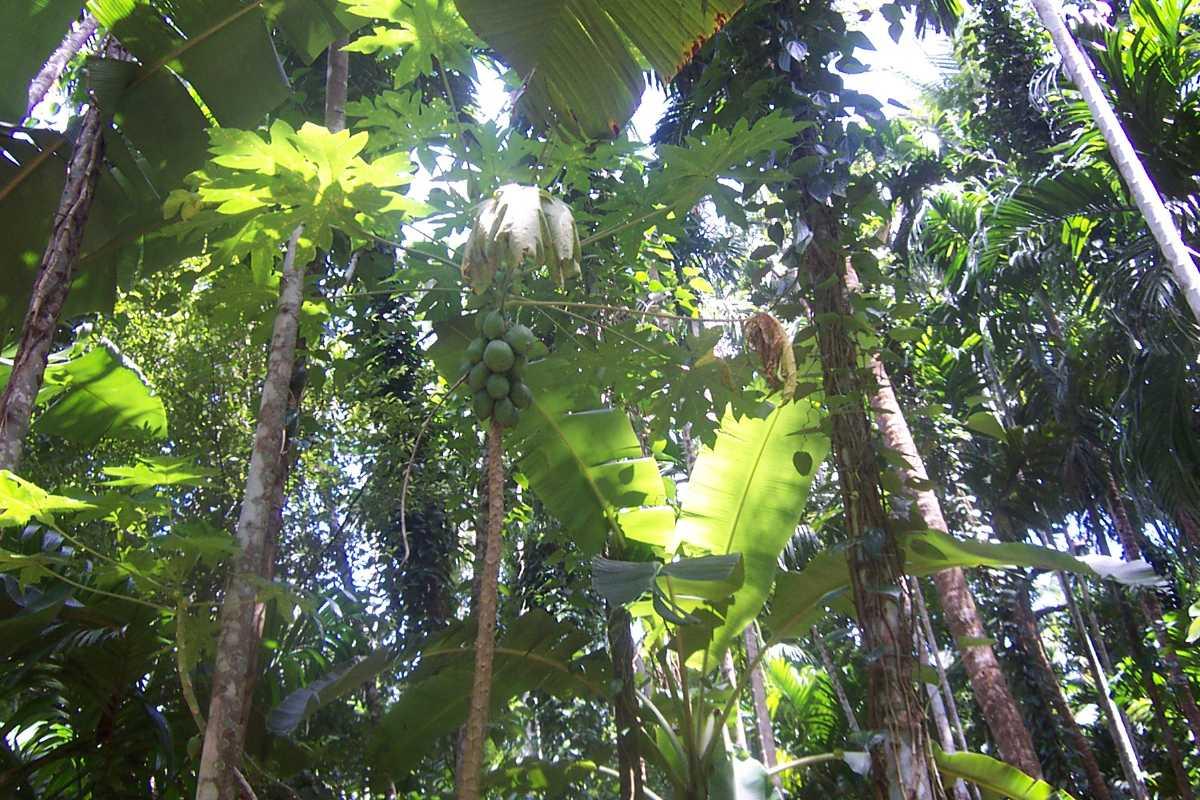 Spice garden, picnic spots in Goa