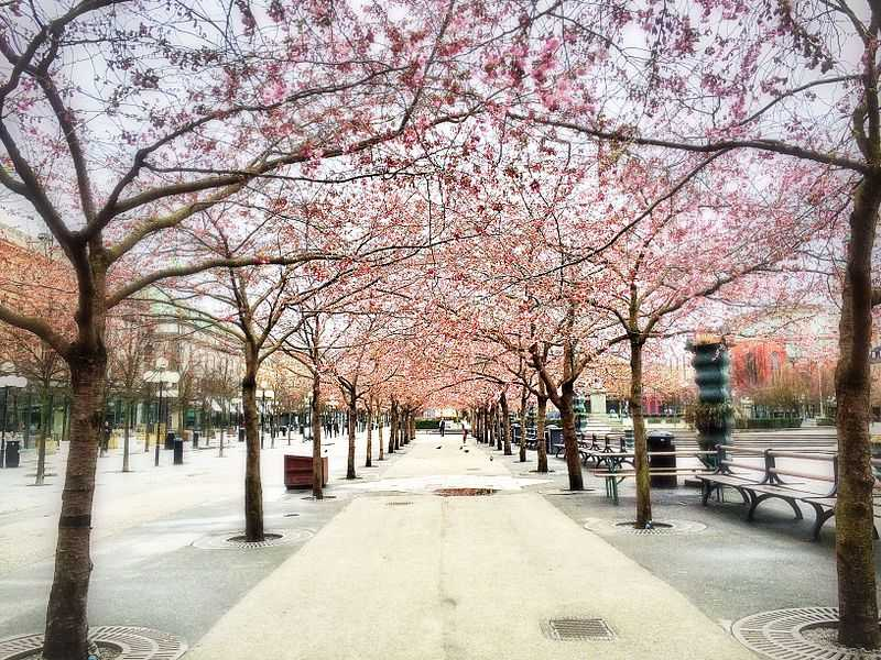 Stockholm, Best Places In The World To See The Spring Blossoms In Its Peak!