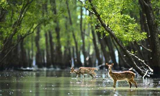 Sundarbans National Park in Monsoon
