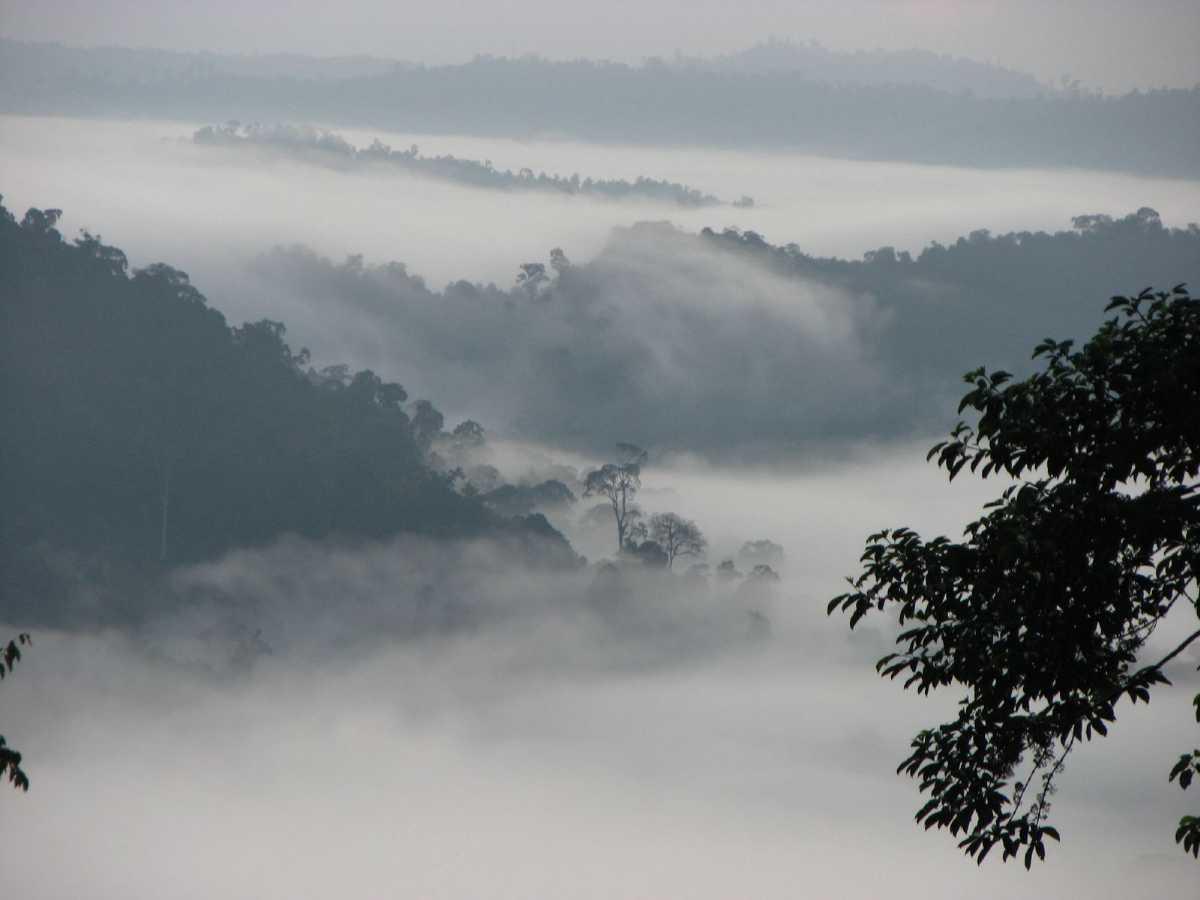 Danum Valley, Malaysia