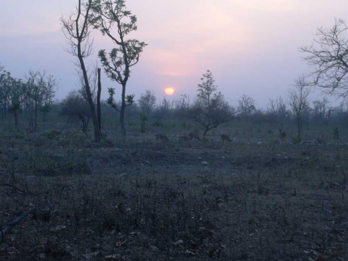 Monsoon Season, Rajaji National Park