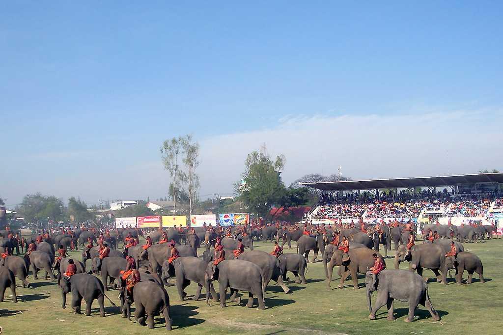 Surin Elephant Festival, Tug of War