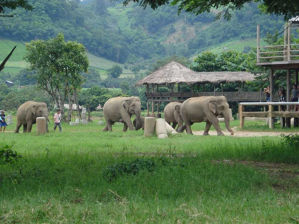 Elephant Sanctuary in Thailand with rich greenery