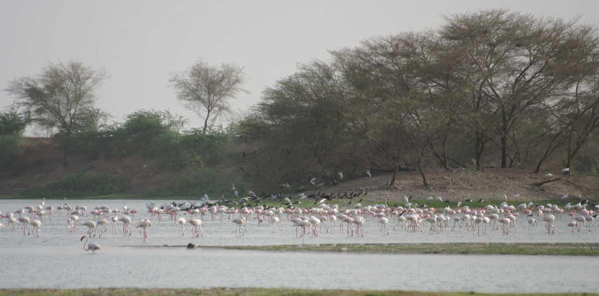 Thol Lake Bird Sanctuary, Picnic spot near Ahmedabad