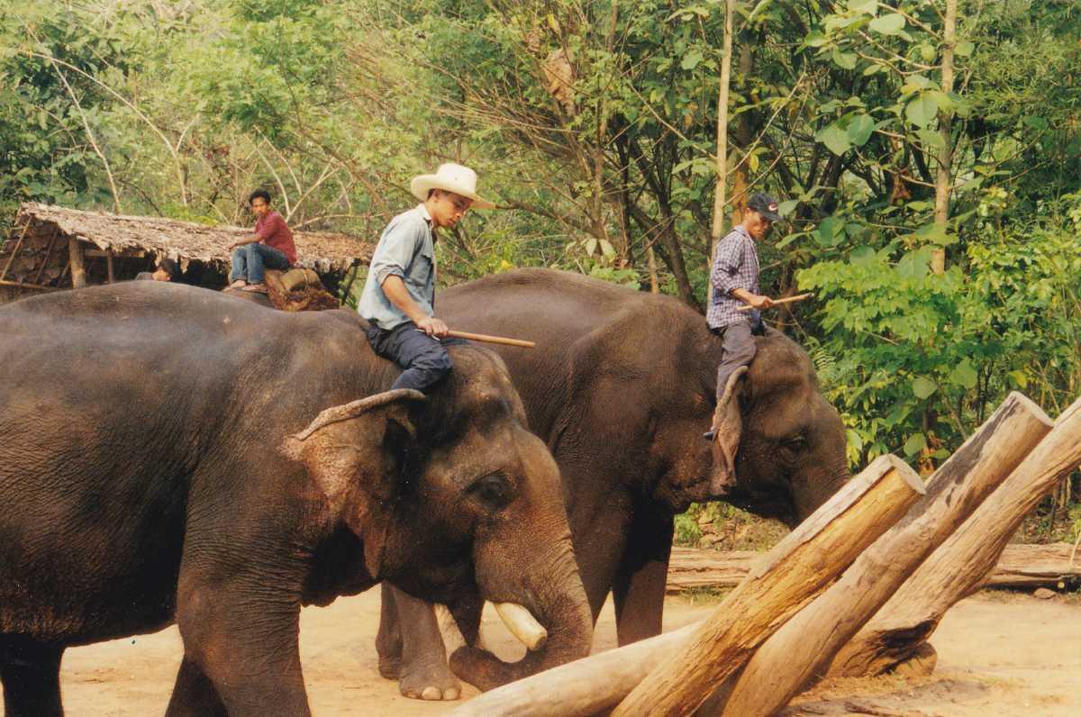 Cruelty on Elephants