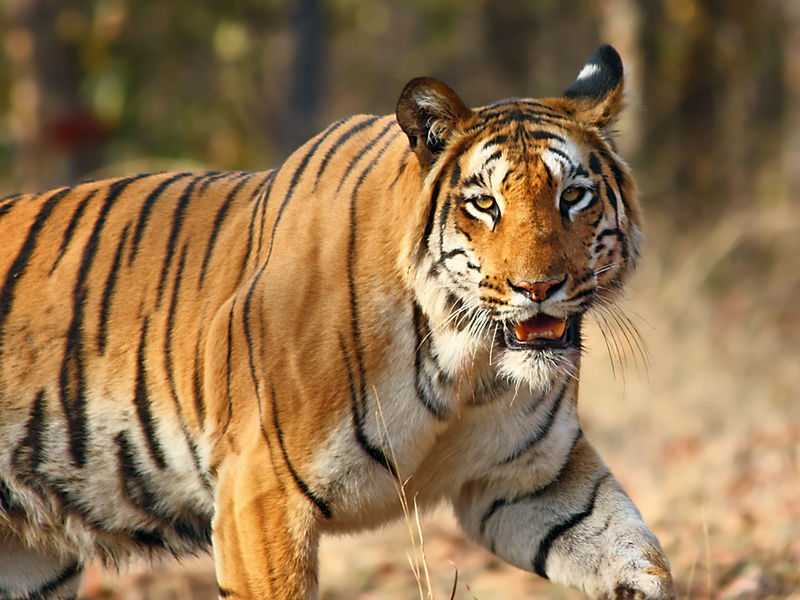 Tiger Reserves in India, Manas Tiger Reserve
