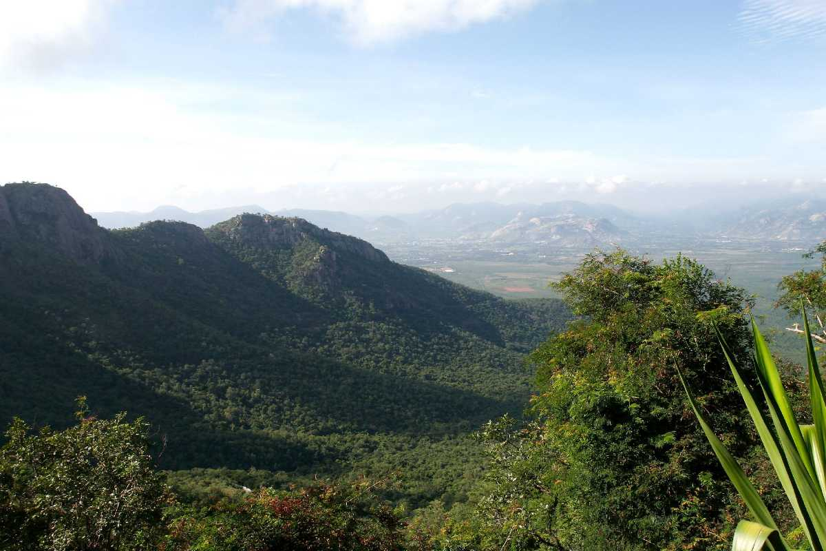 Tirumala View