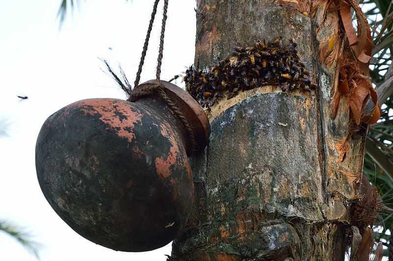 Toddy in Kerala