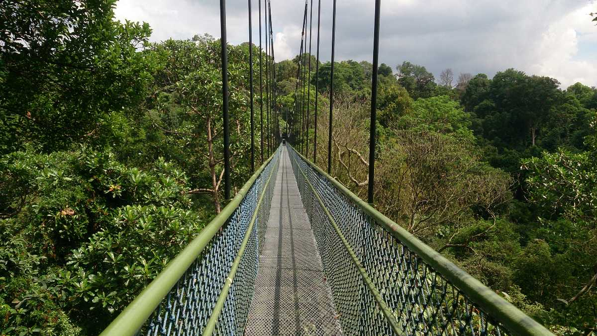 MacRitchie Suspension Bridge, Singapore