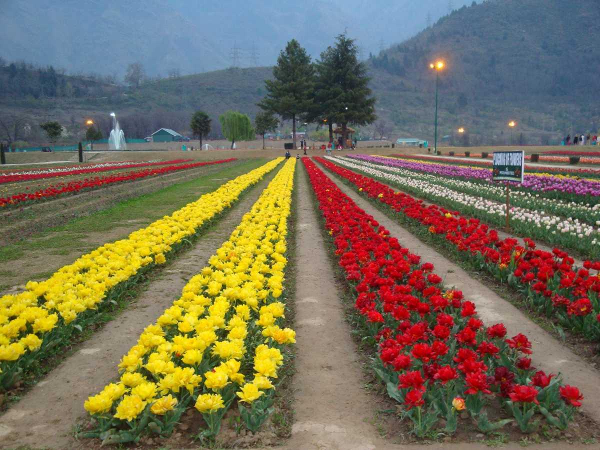 Tulip Festival in Srinagar 2020 | Dates, Venue, Ticket Price ...