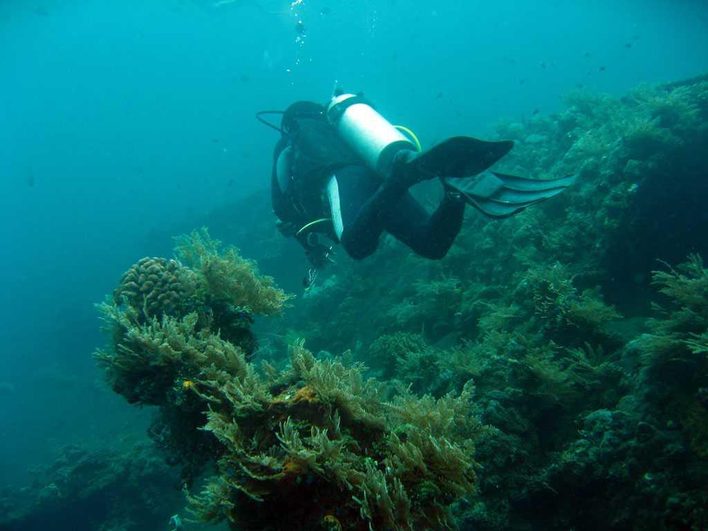 scuba diving in bali, libery shipwreck