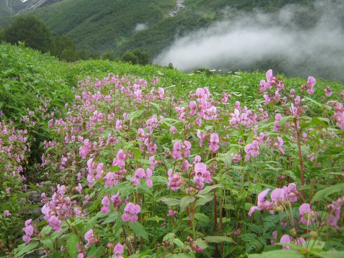 Valley of Flowers, Easy Treks in Uttarakhand and Himachal Pradesh
