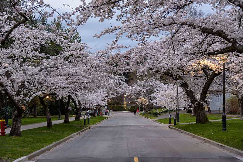 Vancouver, Best Places In The World To See The Spring Blossoms In Its Peak!