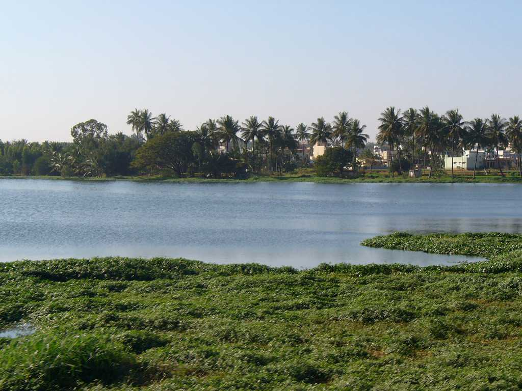 Lakes in Bangalore, Varthur Lake