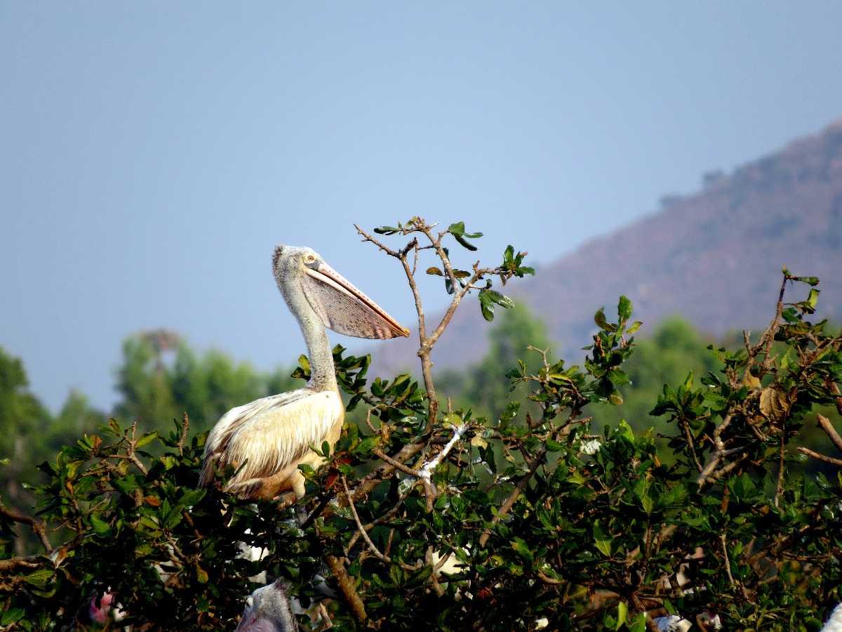 Karikili Bird Sanctuary | Vedanthangal Bird Sanctuary Photos
