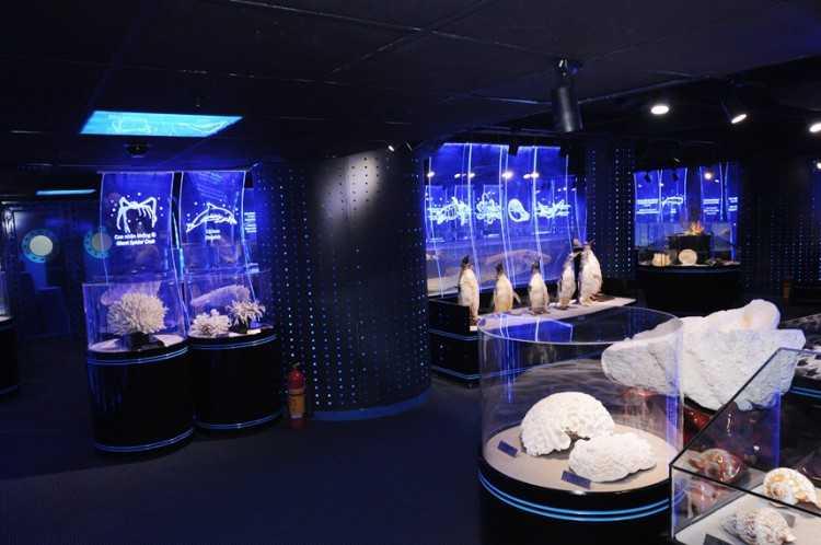Specimen Gallery at Vinpearl Aquarium Times City Hanoi