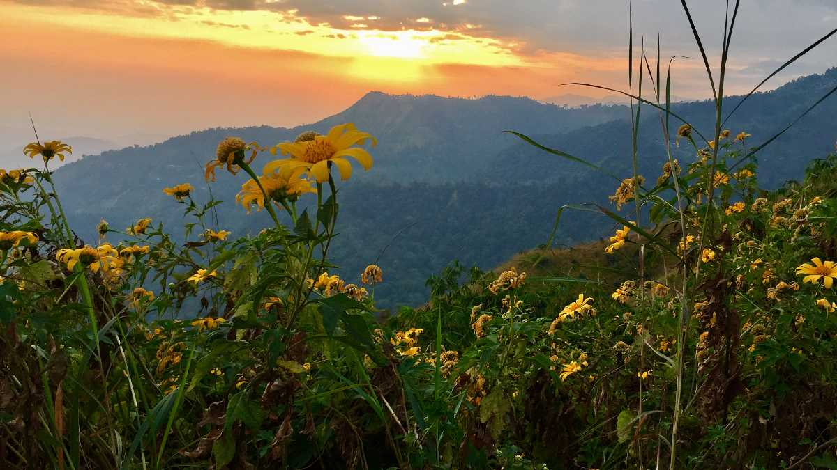 Summer Season, Kurseong, Sunset