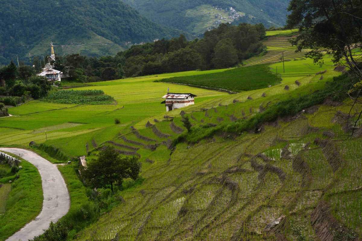 Ziro Town, Arunachal Pradesh