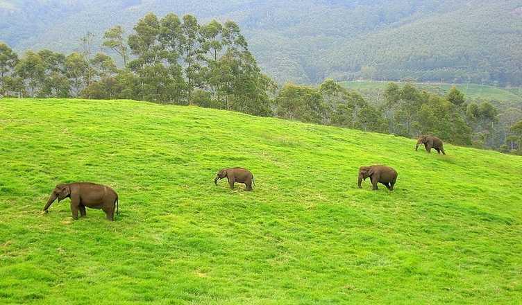 Mathikettan Shola National Park
