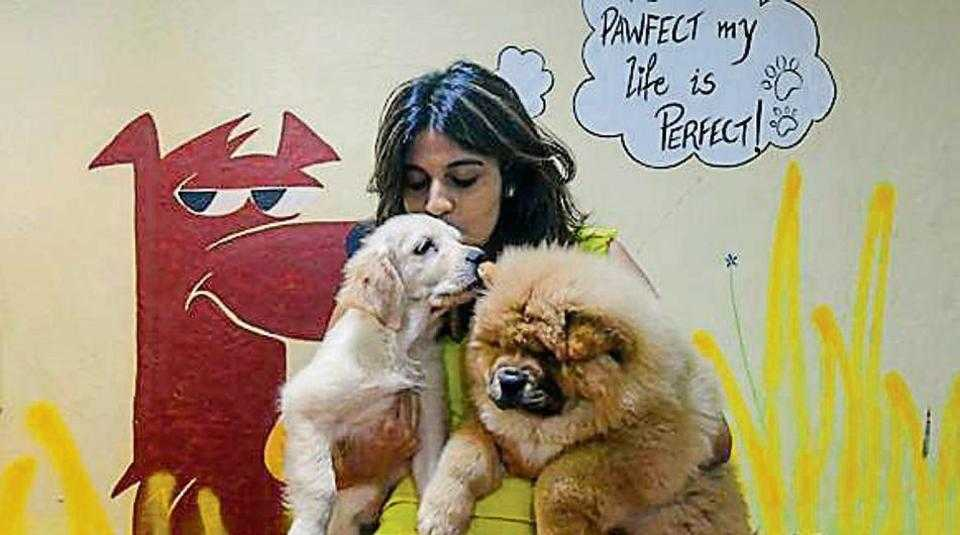 Pawfect Life - Dog Daycare Center, Places in Mumbai for Kids