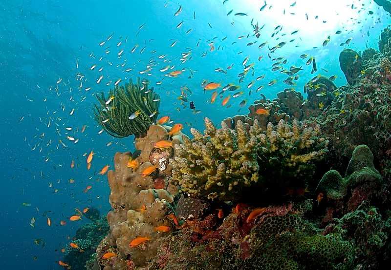 Diving in Bentota