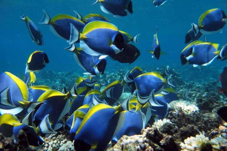 Snorkelling is Praslin Island Seychelles