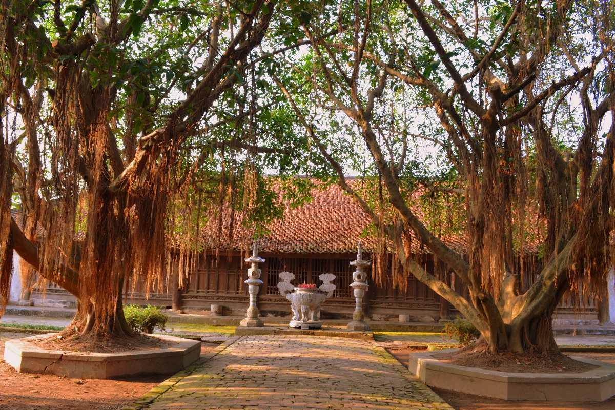 Banyan Trees around the Pagoda But Thap Hanoi