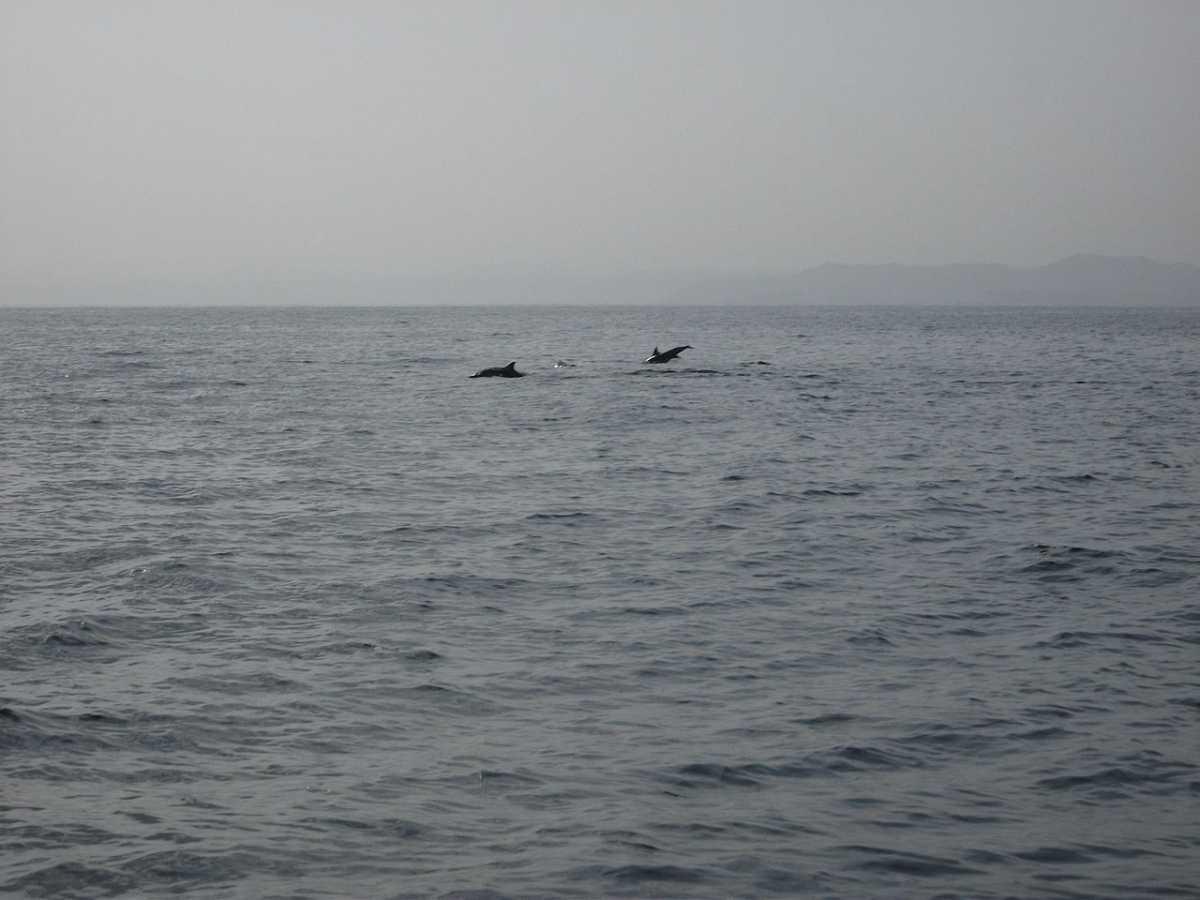 dolphin in al bandar