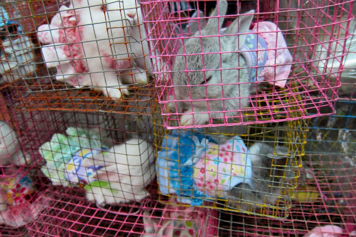 chatuchak market, animals