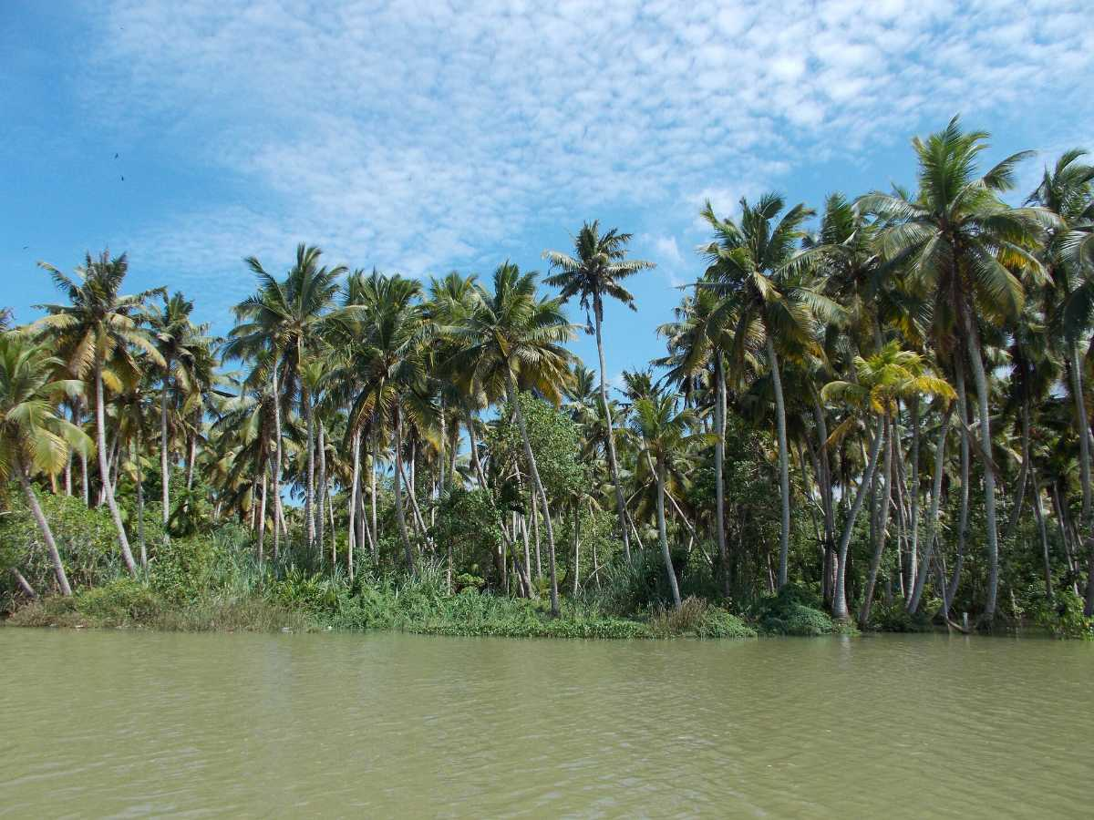 Backwaters of Poovar, Trivandrum