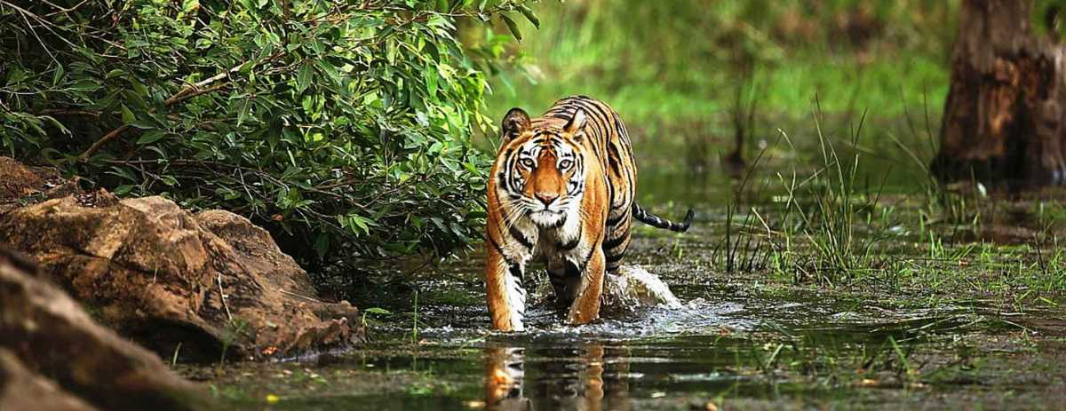 Bandhavgarh National Park makes a fantastic wildlife experience to have a bachelor's party.
