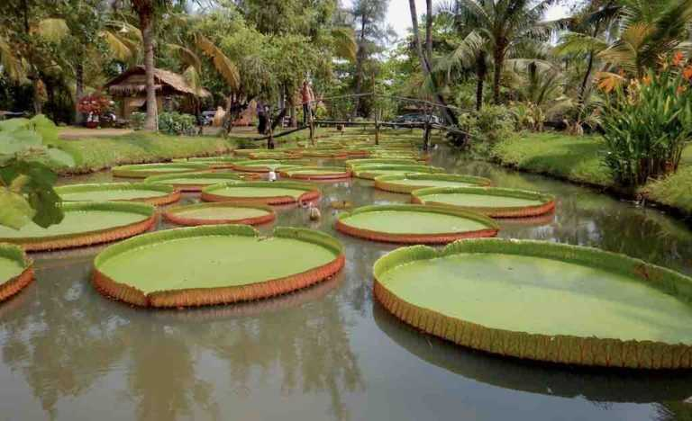 Binh Quoi Village Ho Chi Minh City Vietnam