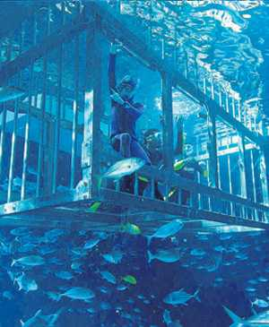 Cage Snorkelling at Dubai Aquarium and Underwater Zoo