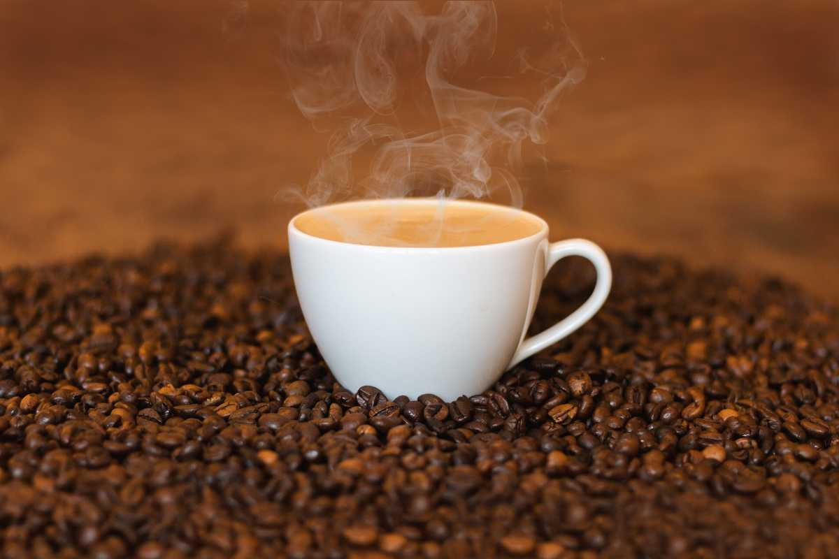 Coffee In Bali The Best Balinese Coffee Blends You Must Try