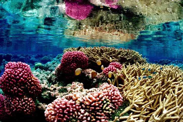 Coral Garden, Scuba diving in Mauritius