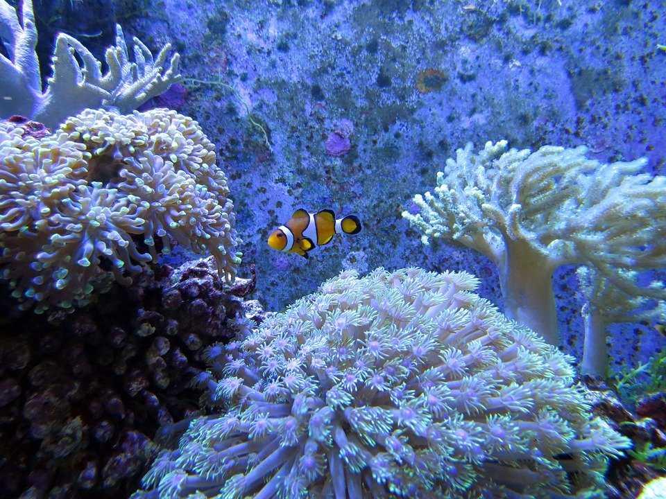 White Coral Dive Site