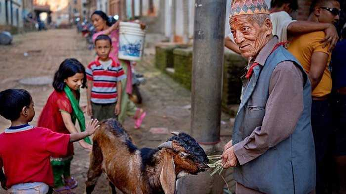 Dashain Goat For Sacrificing