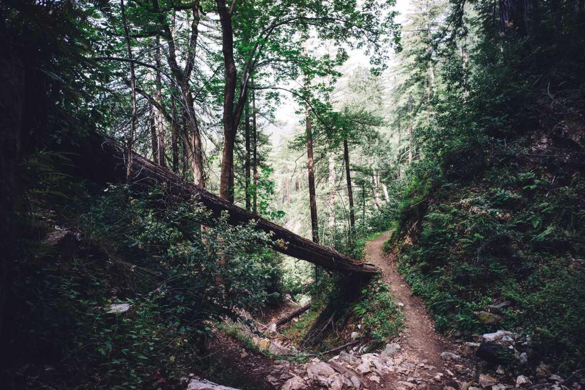 Wilderness of Bhimtal