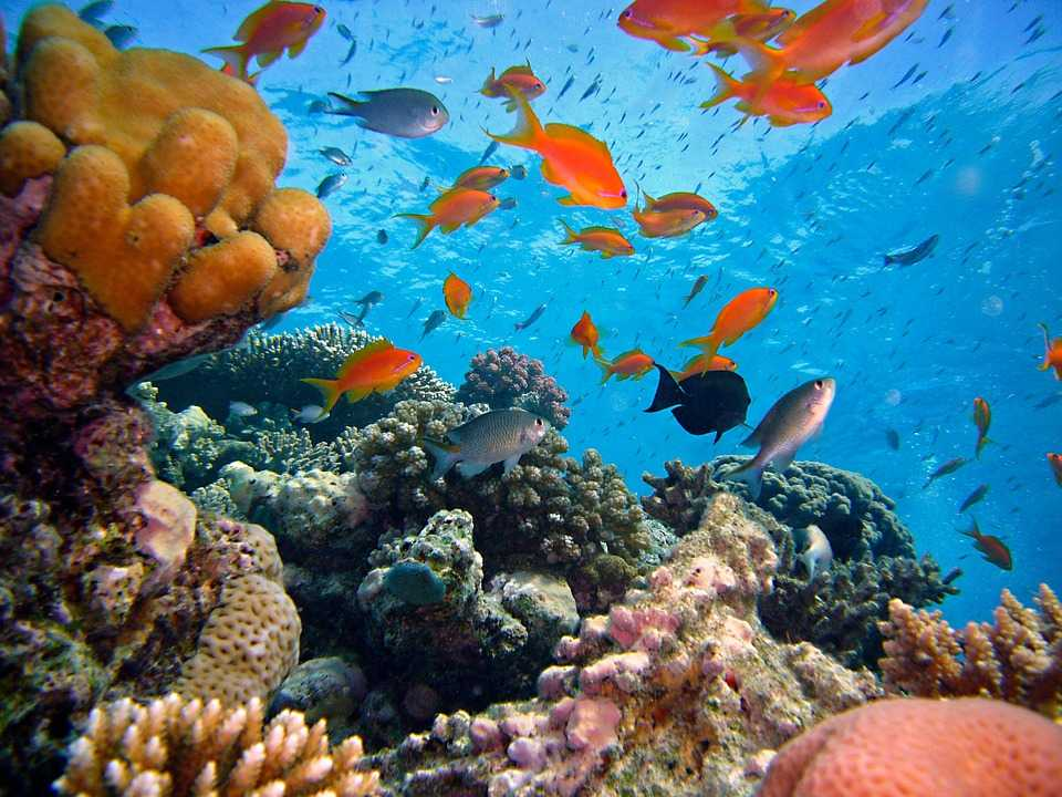 Scuba Diving in Bali, Amed Beach