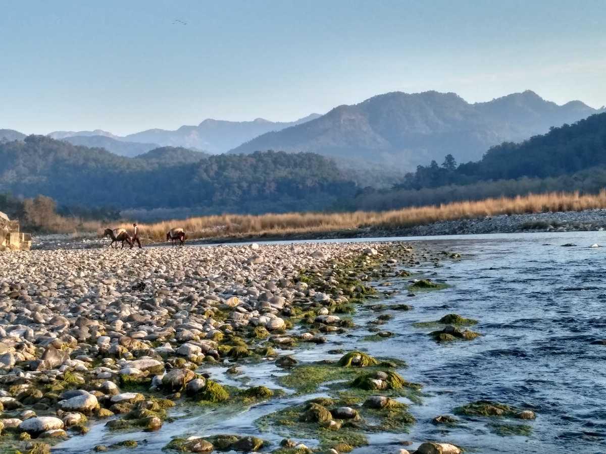 Kosi River, Jim Corbett National Park