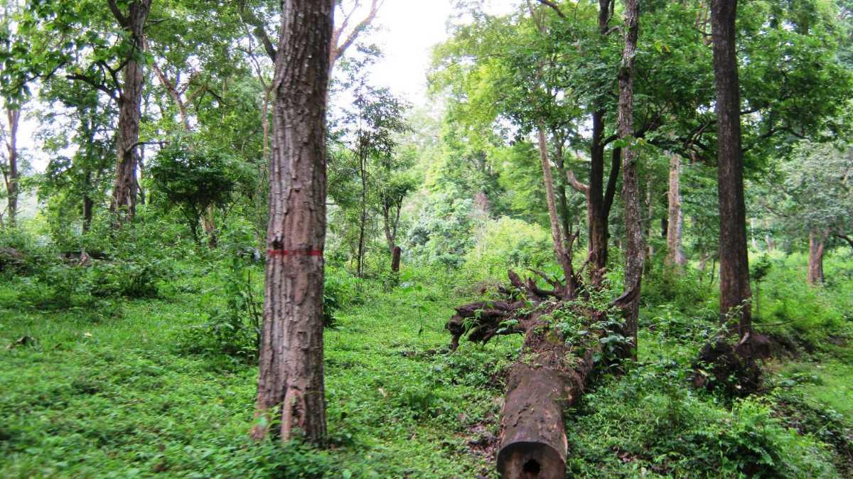 Safari in Anamalai Tiger Reserve