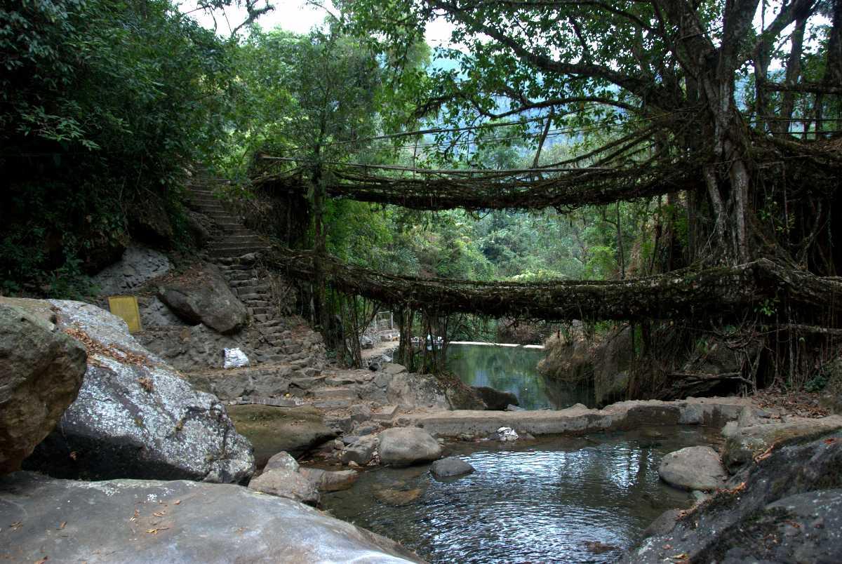 A double decker living bridge in Meghalaya