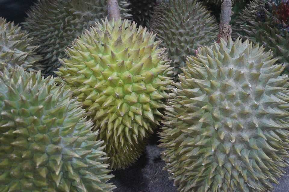 Durian fruit, strange laws of Bangkok, Thailand Bangkok Facts