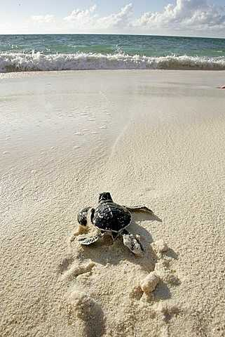 Green Turtle, National Parks in Seychelles