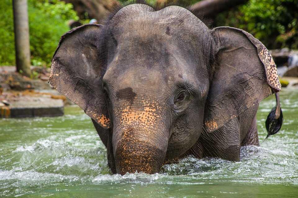 Elephant Hill Luxury Resort, Thailand