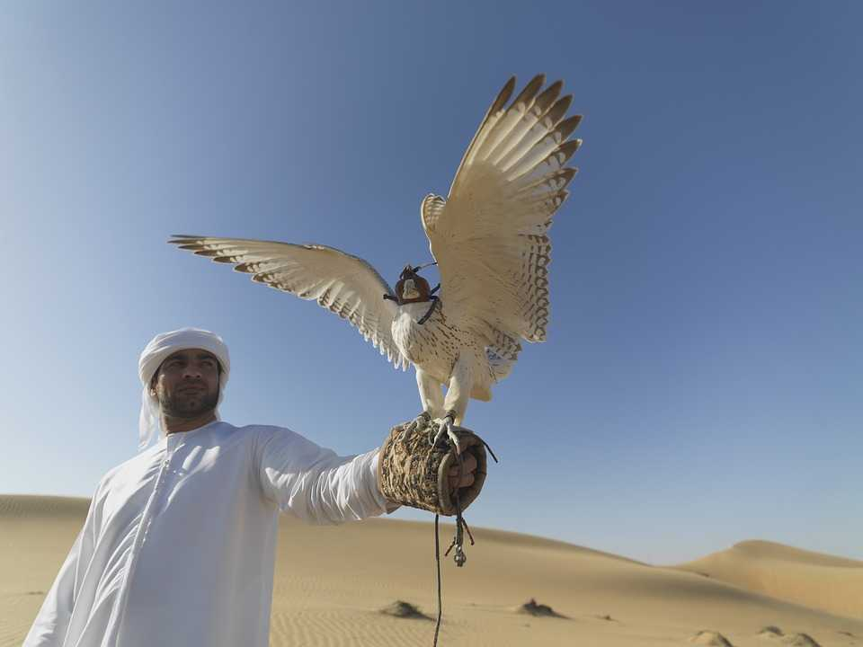 A man following the falconry tradition in UAE