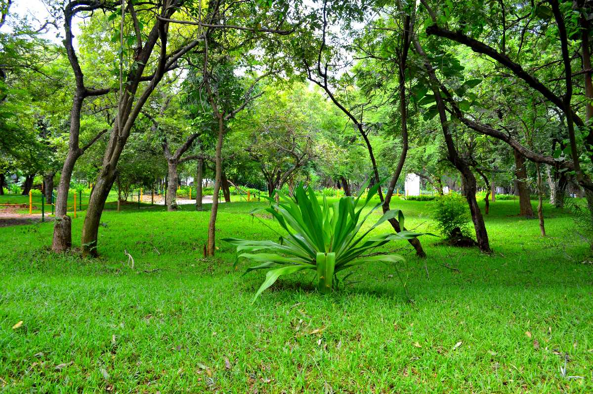 Children's Park at Guindy National Park