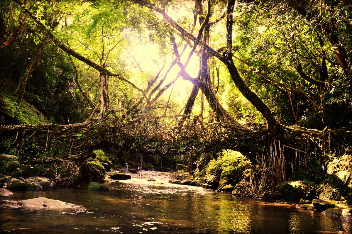 Root Bridges of Cherrapunji in Meghalaya