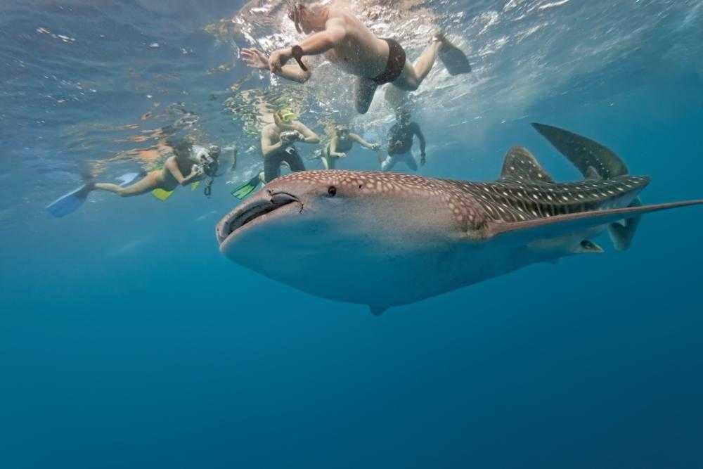 Anse Source d'Argent Snorkelling