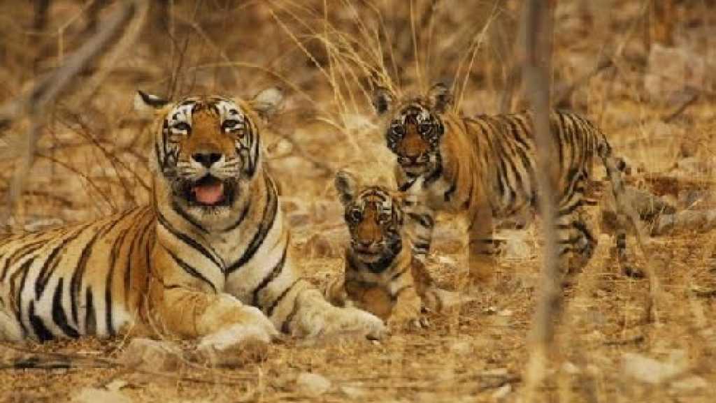 Indravati Tiger Reserve